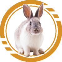 Купить Комбикорм для кроликов - Кривой рог