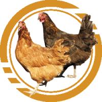 Купить Комбикорм для кур – несушек - Кривой рог
