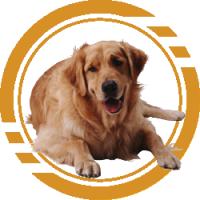 Купить Корм для собак - Кривой рог