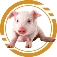 Купить Комбикорм для свиней - Кривой рог